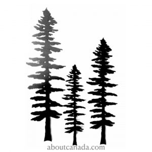 SITKA TREE